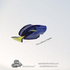 Saltwater fish Prints