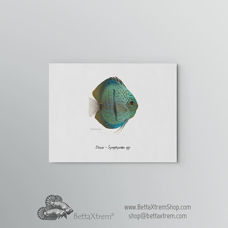 Lámina Discus Symphysodon 3