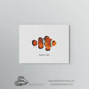 Lámina Amphiprion ocellaris