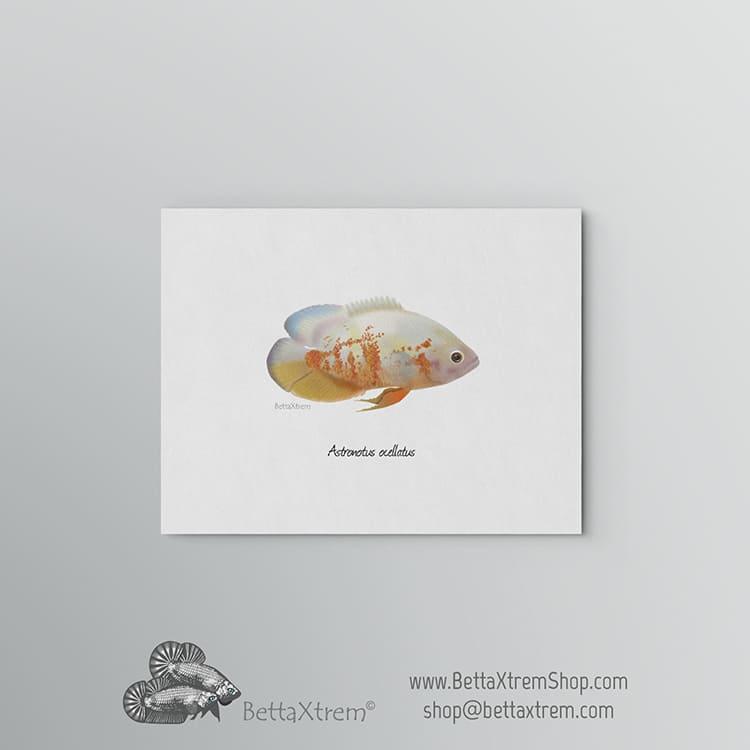 Lámina Astronotus ocellatus albino 1