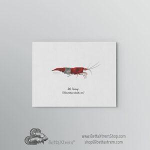 Lámina Gamba Rili Shrimp