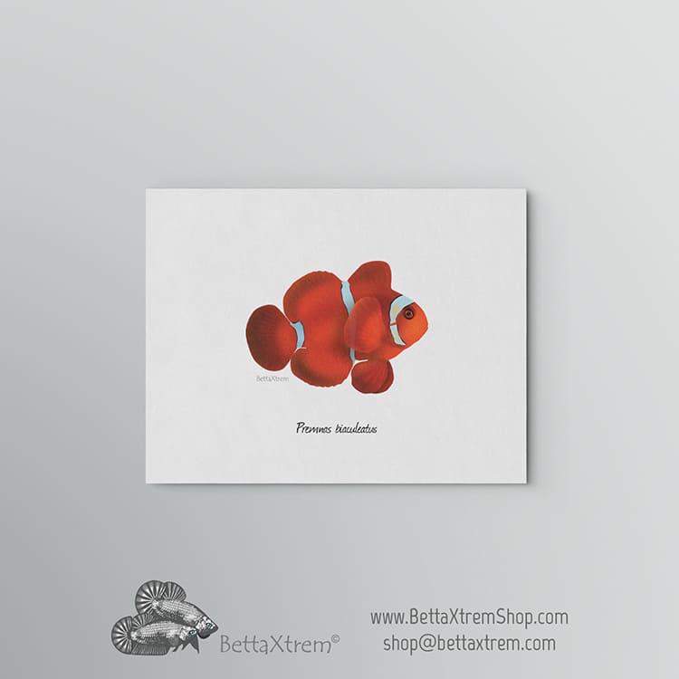 Lámina Premnas biaculeatus