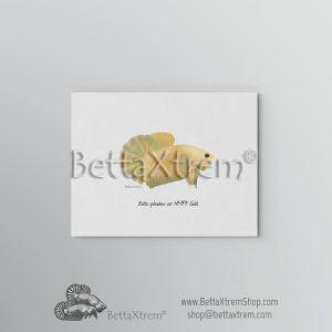 Lámina Betta splendens halfmoon plakat gold