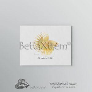 Lámina Betta splendens crowntail gold